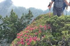 Pascal dans kes rhododendrons du Soum de Porcabarra