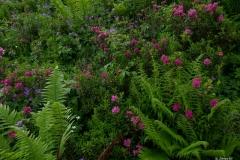 Rhodos en fleurs